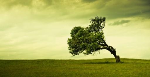 עץ עקום מתיישר?